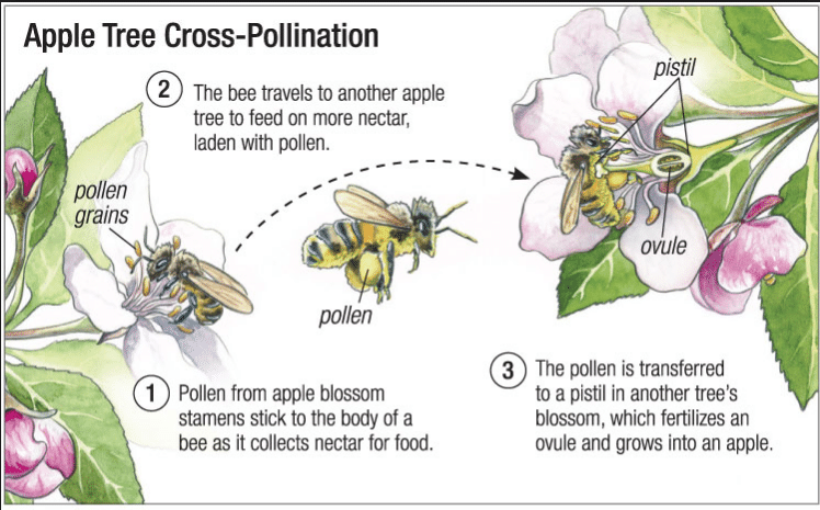 Pollination Google Search Perfect Plants Pollination Plant Nursery