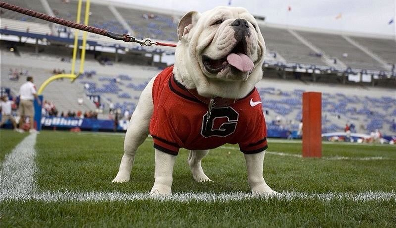 Pin By Scott Strait On Georgia Bulldogs Dogs Famous Dogs What Dogs