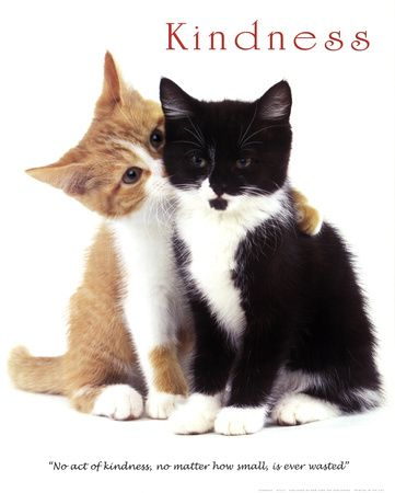 Kindness Posters At Allposters Com Kittens Cutest Cute Cats