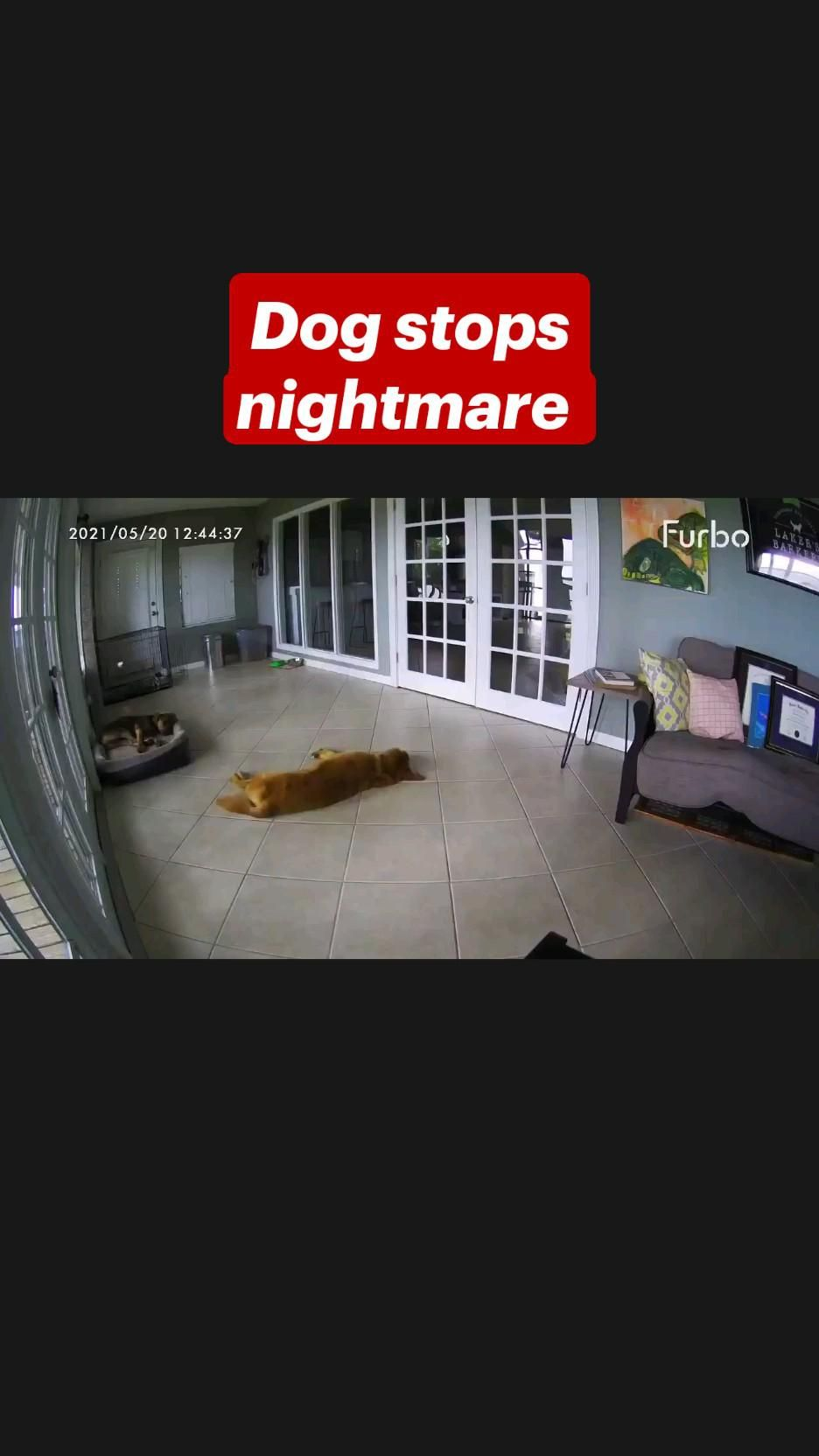 Dog stops nightmare