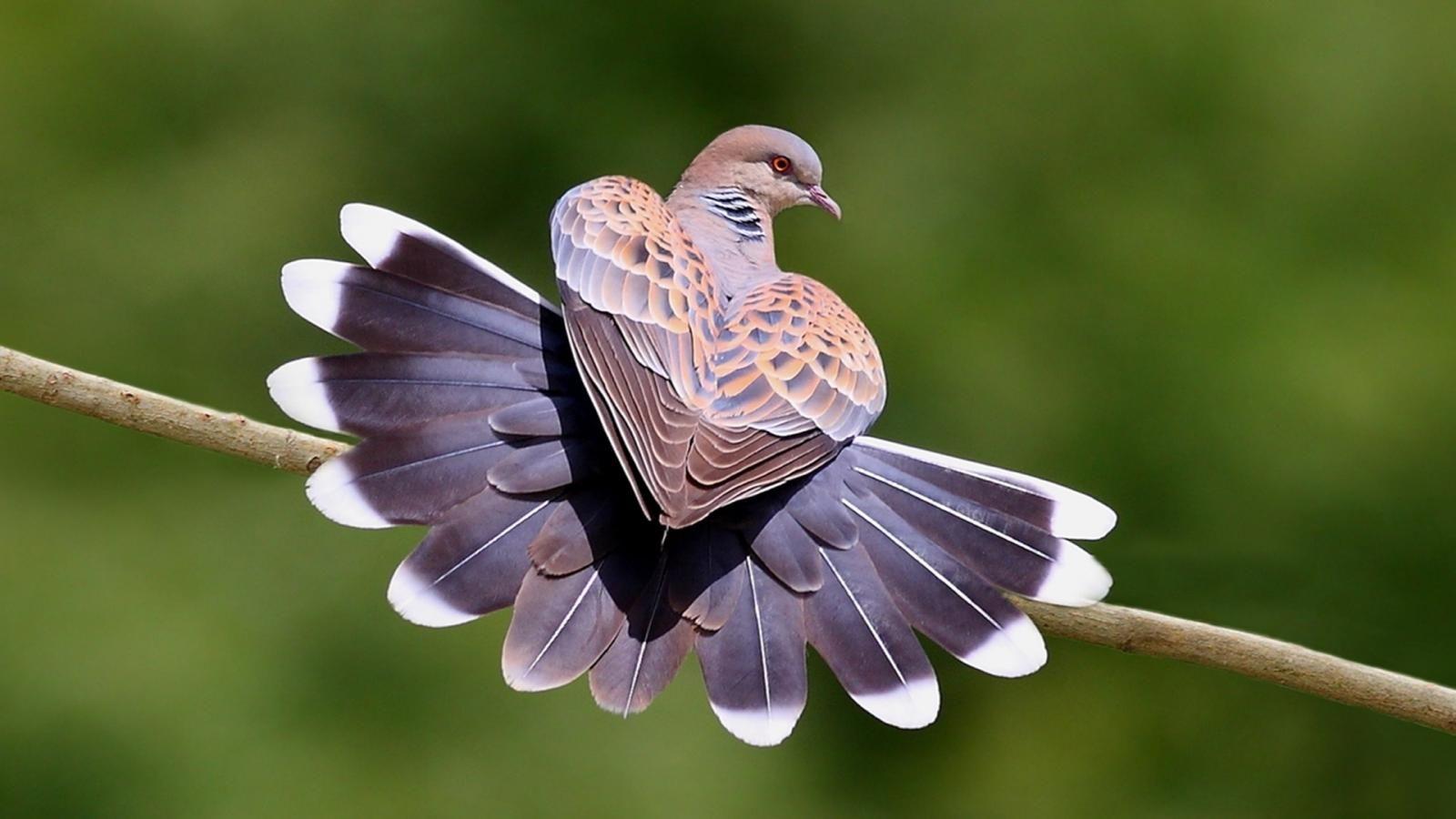 Beautiful Birds in Nature Wallpapers Birds HD Images