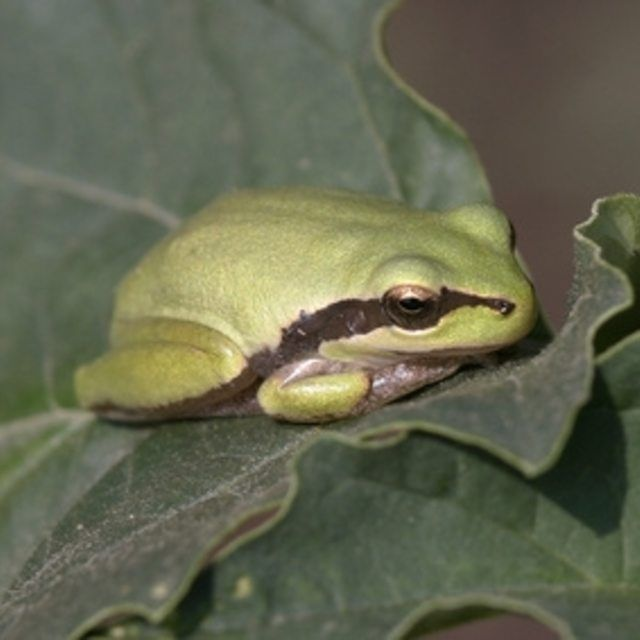 Putting a frog house in your yard will attract frogs to it ...