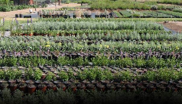 Clearwater Native Plant Nursery Redmond Or Online Catalog