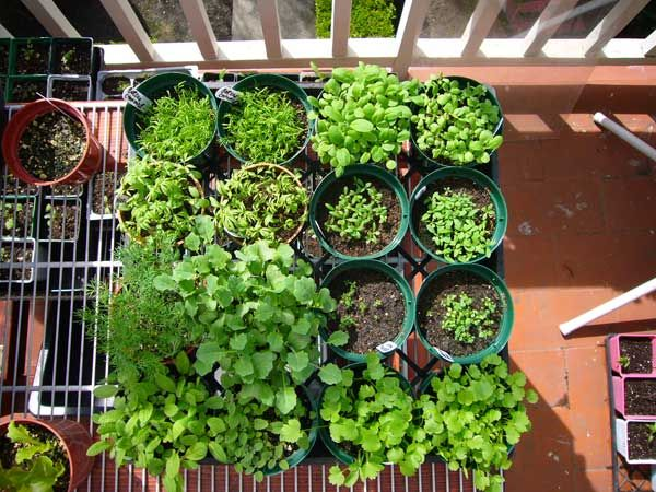 Starting A Vegetable Garden Includes Top 10 List Of 400 x 300