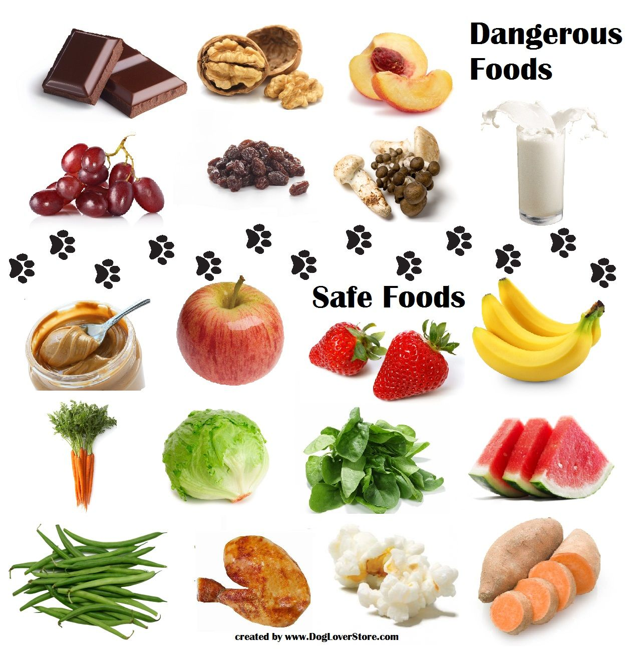 Dangerous Food For Dogs Safe Food For Dogs Dog Food Recipes