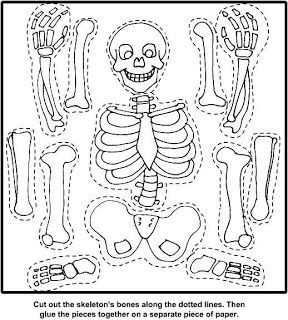 Anatomy Skeleton Craft Skeleton For Kids Coloring Pages