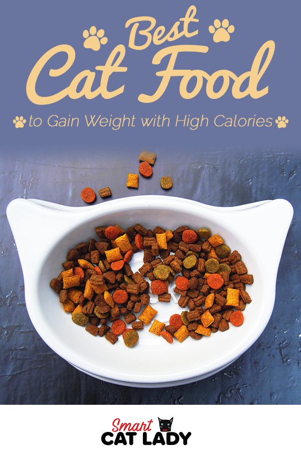 Best cat food to gain weight. Does your cat need to gain