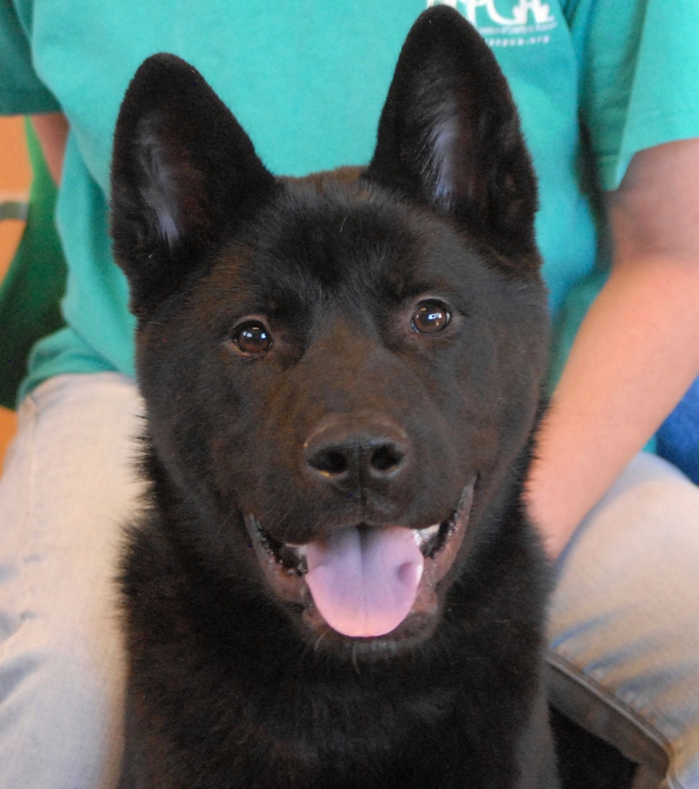 Hachi is an Akita puppy rescued perilously close to a Las