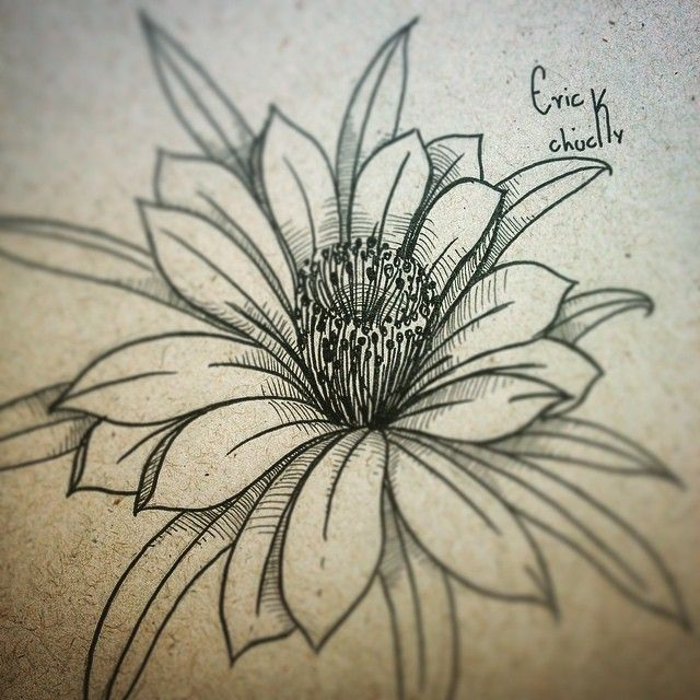 Resultado De Imagem Para Flor De Mandacaru Desenho Flor De