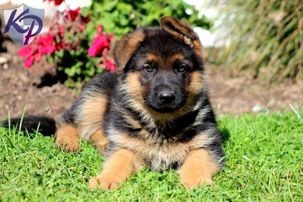 Puppy Finder Find Buy A Dog Today By Using Our Petfinder Red