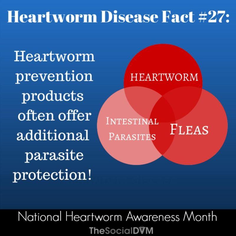 The Social DVM The Social DVM Heartworm awareness