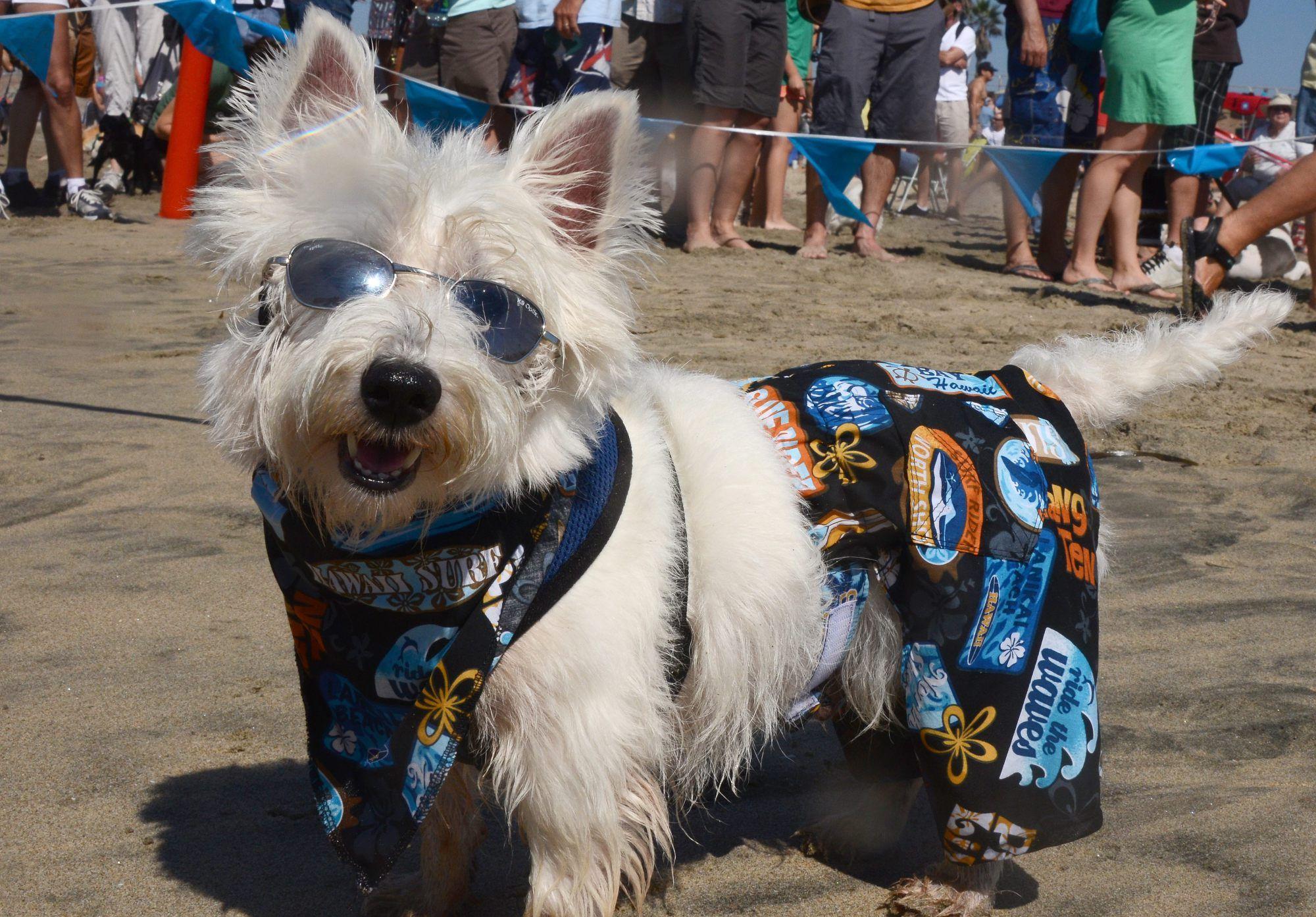 15195e7c8eb Best Dog-Walking Trails In Orange County - CBS Los Angeles