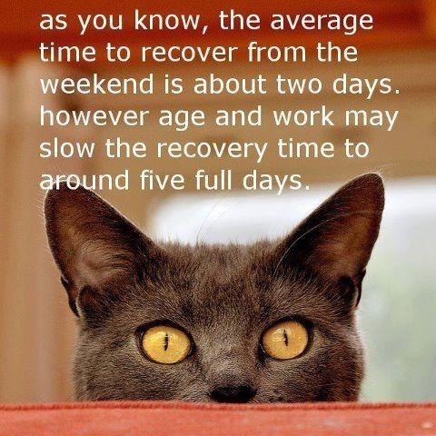 Résultats de recherche d'images pour «have a great week picture cat quotes»