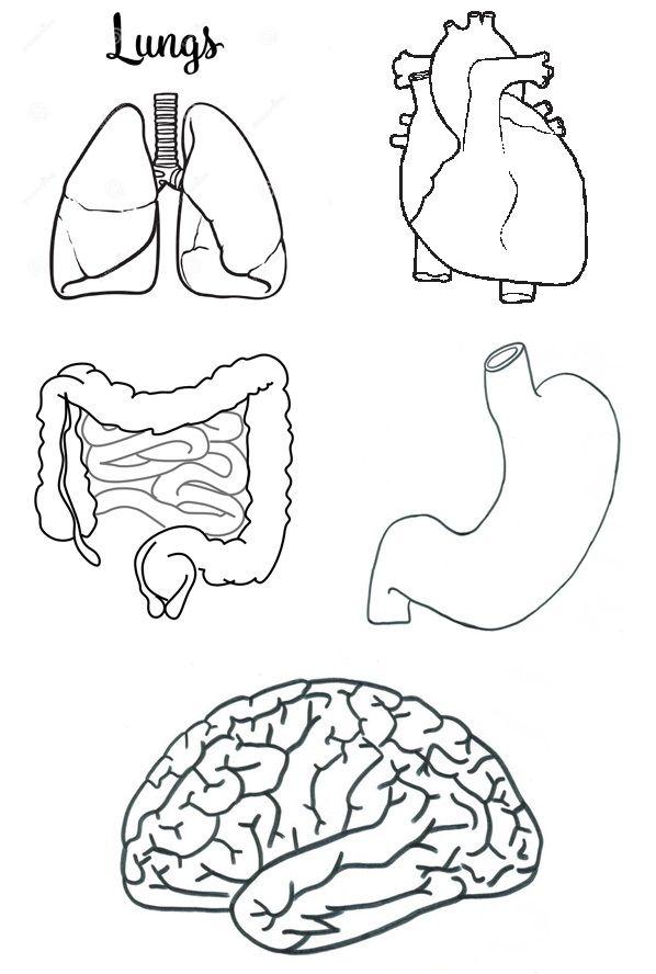 Manualidadesconmishijas: El sistema respiratorio y