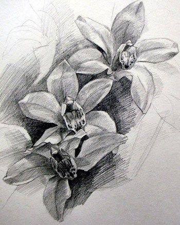 Floral Pencil Drawings Pencil Drawings Of Flowers Pencil