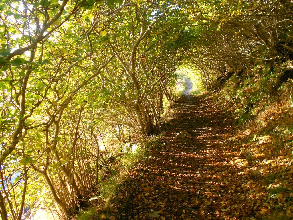 Path in Scotland; photo by Robyn Boyd http://www.lauradavis.net/cometoscotland