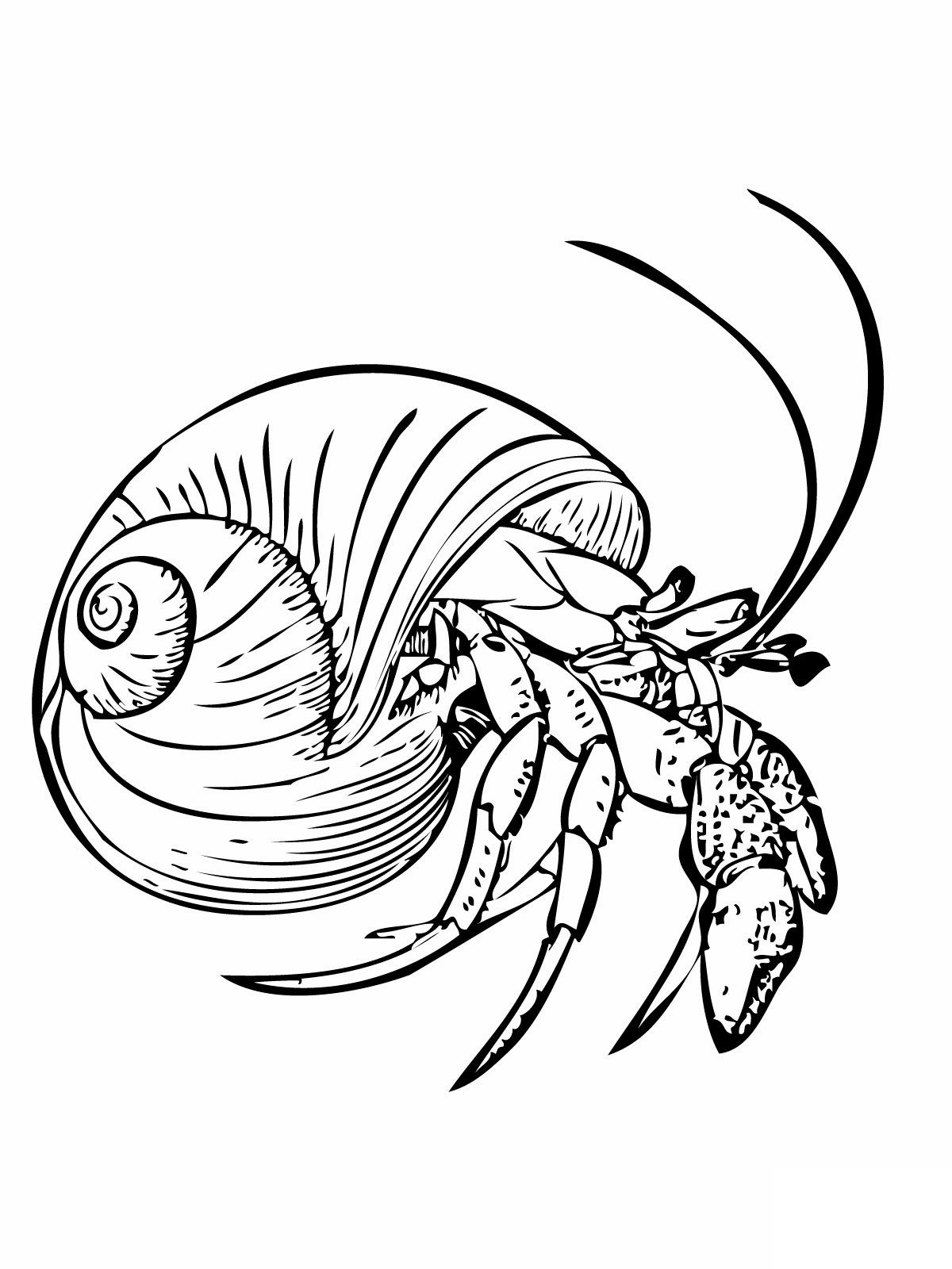 Free Printable Hermit Crab Coloring Pages For Kids In 2020 Animal Coloring Pages Coloring Pages For Kids Coloring Pages