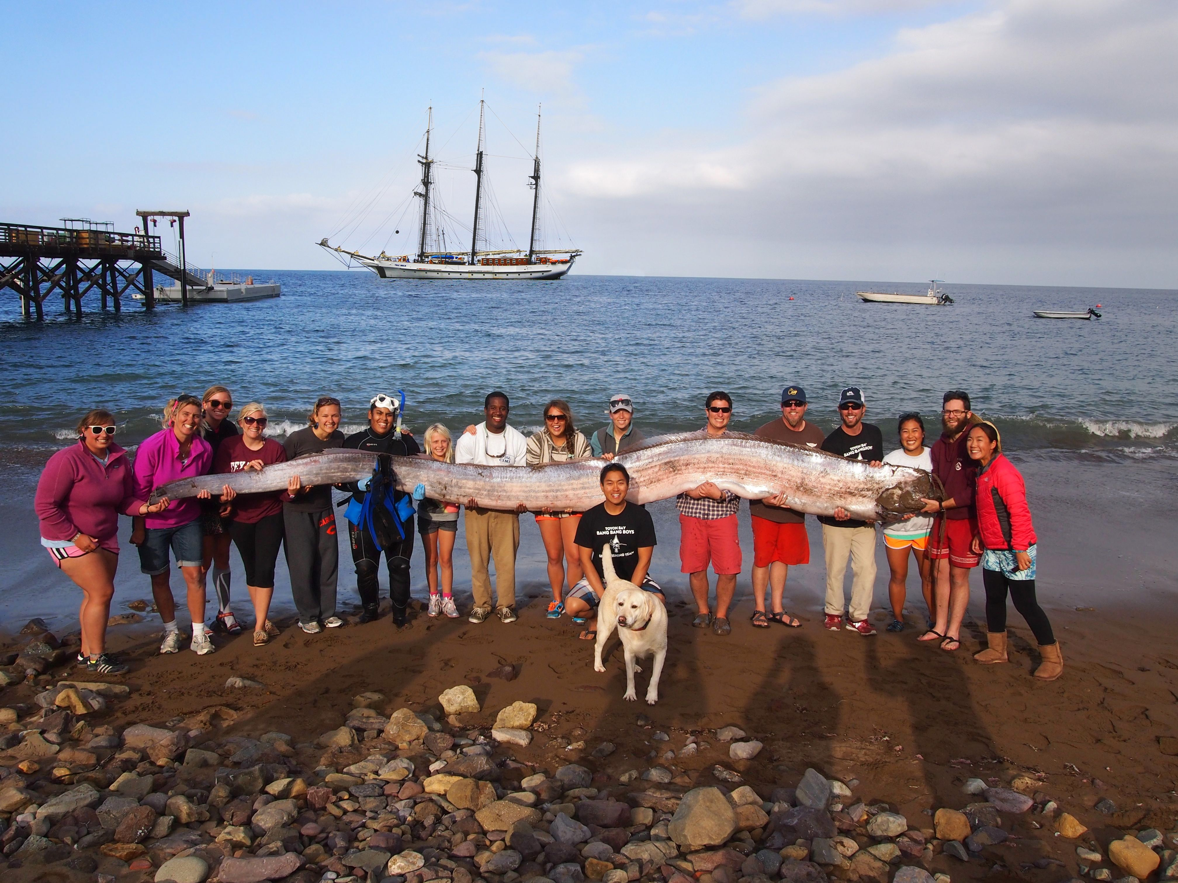 We Were Returning From An Exibition And Found This Oarfish Dead At The Bottom Of Toyon Bay October 2013 What We See Oarfish Deep Sea Creatures Sea Ser