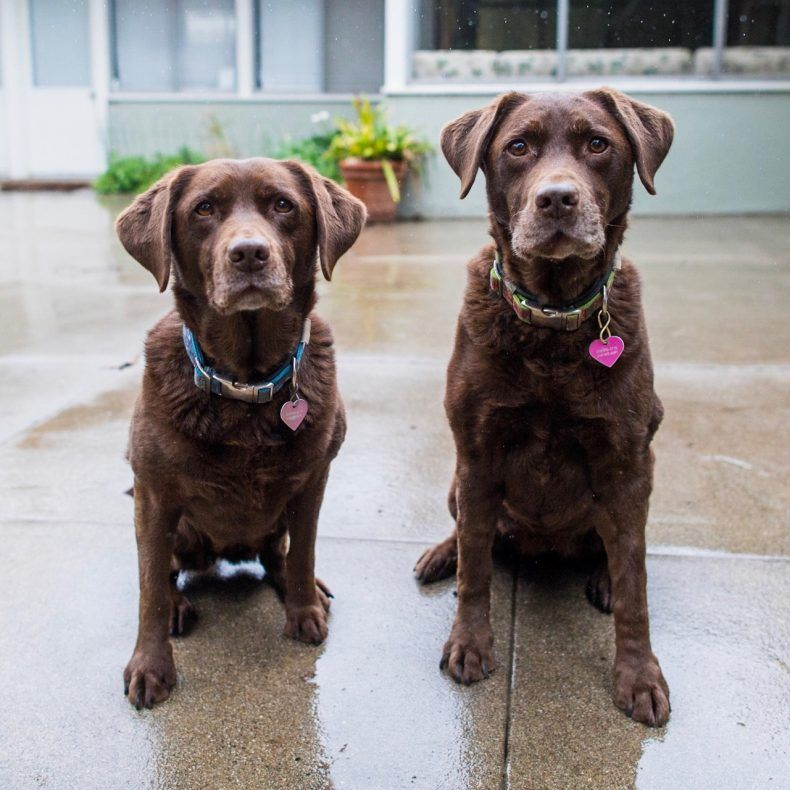 Seeing Double Best Pairs Dogist The Story Of Dogs Chiots Labrador Chien Caniche