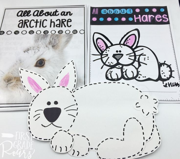Arctic Hare Informational Text Reading Writing Research
