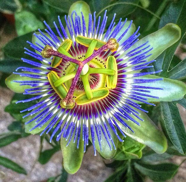 Pin By Aleksandra Andreyev On Flowers Plants Trees Trees To Plant Plants Flowers