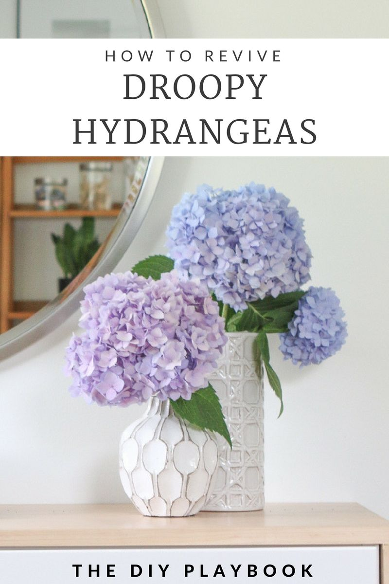 How to Revive Droopy Hydrangeas DIY Playbook Hydrangea