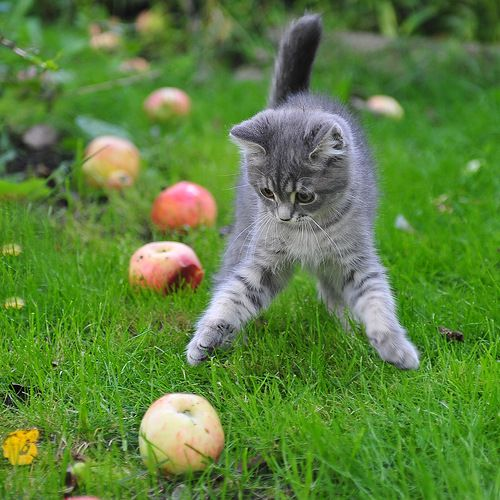 """If you want apples, you have to shake the tree."" --Hungarian Proverb"