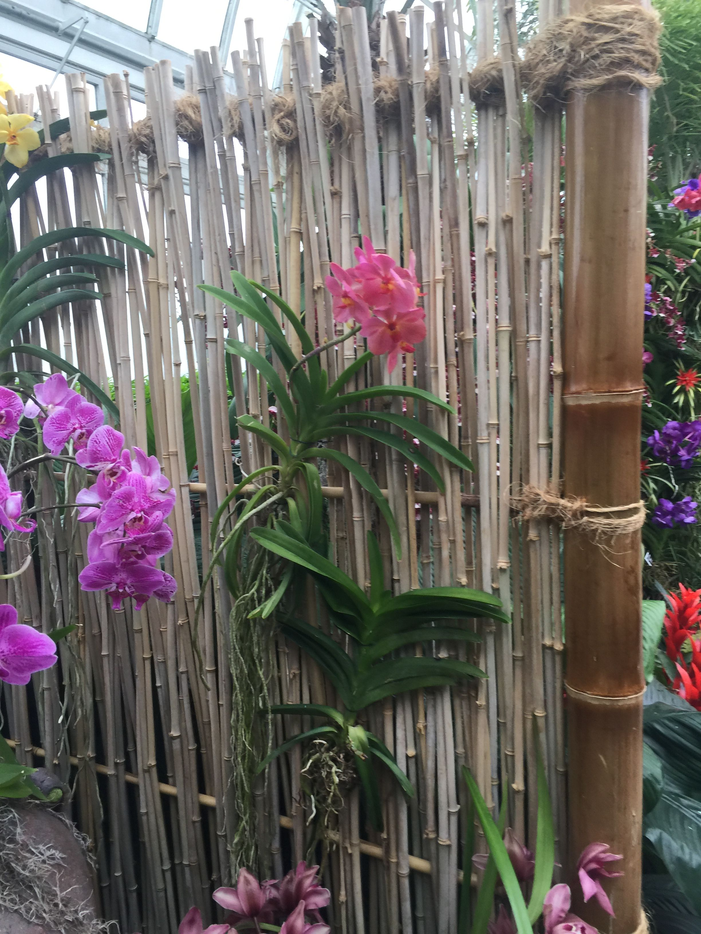 Liked The Bamboo Idea As A Screen To Hang Orchids Orchids Vanda Orchids Orchid Flower