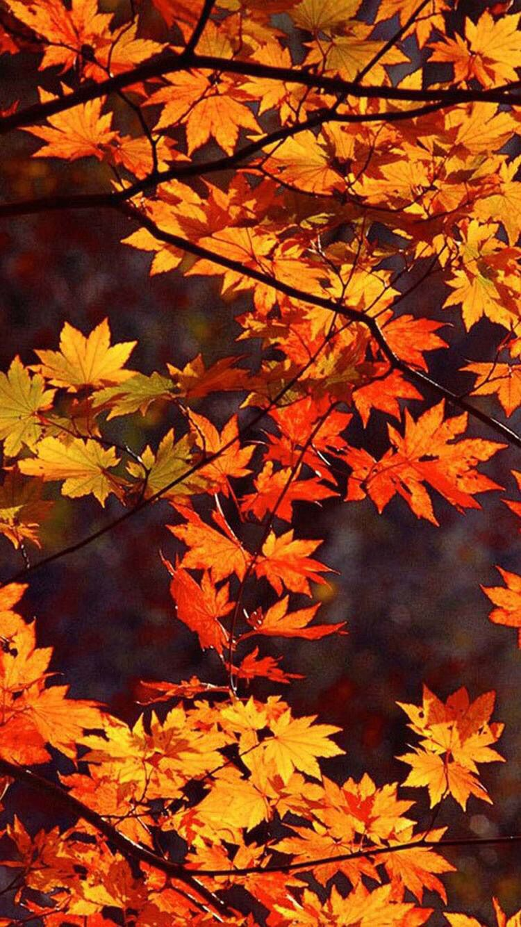 AA Color Wallpapers Page Tree Forest Colors Change Autumn
