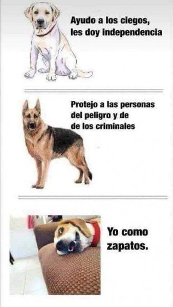 Jajaja Que Util Perros Graciosos Memes Perros Memes De Perros Chistosos