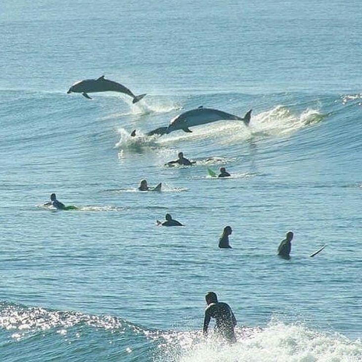 Pin von Sebastian Robles auf Cabalgando las olas | Pinterest | Natur