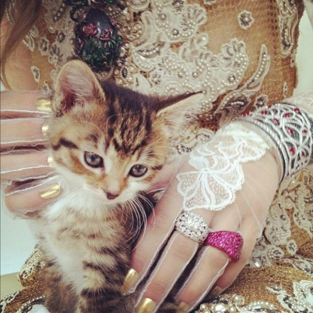Nick Knight Photographs Kittens and Couture for the High Fashion Instagram Shoot
