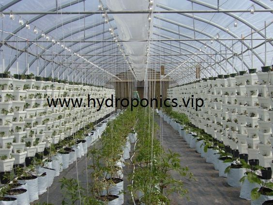Agriculture Hydroponic Hydroponics Grow Growing