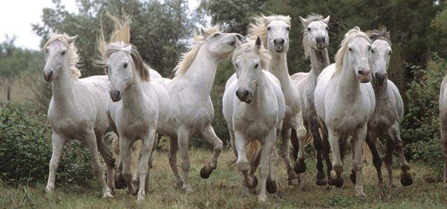 Feng Shui 8 Horses | H...