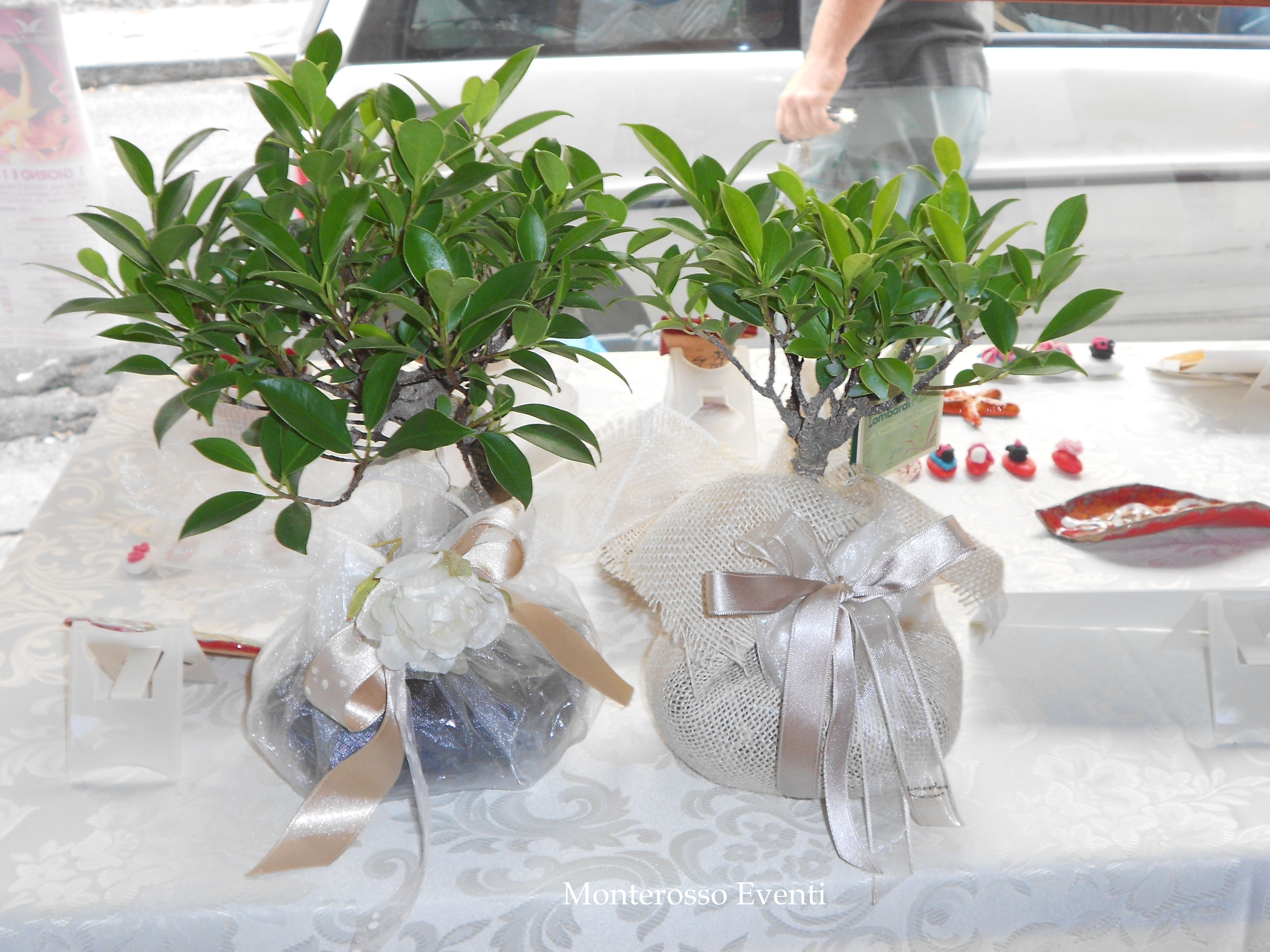 Bomboniera Matrimonio Natalizio : Bomboniere solidale nicola wedding pinterest bonsai