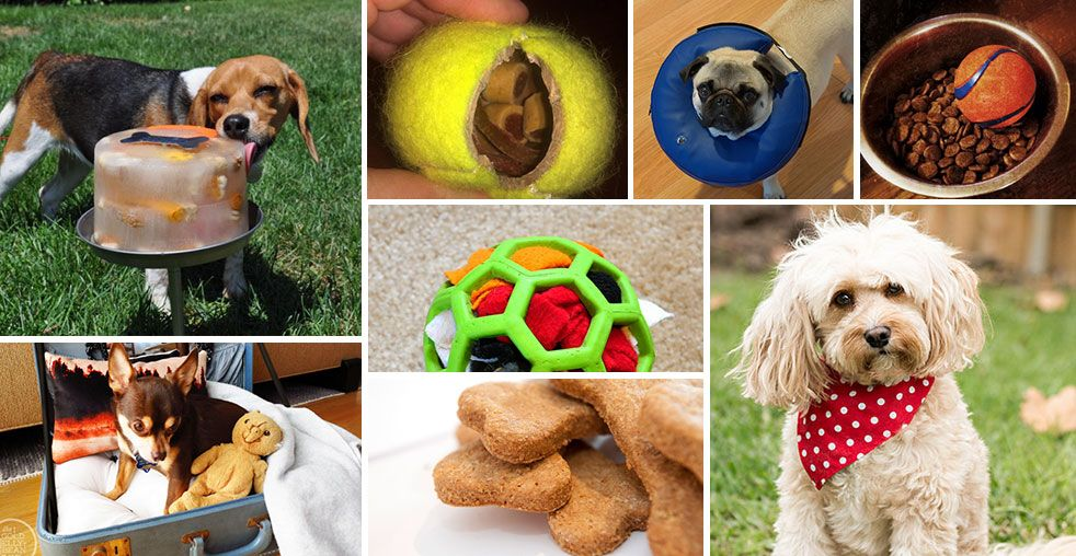 These top tips, tricks and hacks will change your life! Taking care of a dog needn't be stressful - follow these unexpected tips for an easy life .
