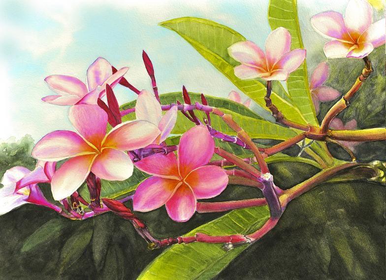 Marcia Minnichhofer Plumeria Paintings Katie Moragne Moir Daisy Wilcox Kaneohe Sunrise Loretta Singapore Nebels Lei Rainb Pinturas Pintura De Flores Arte Sacro