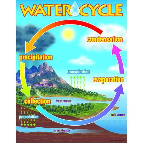 Chart the water cycle also classroom printables pinterest rh