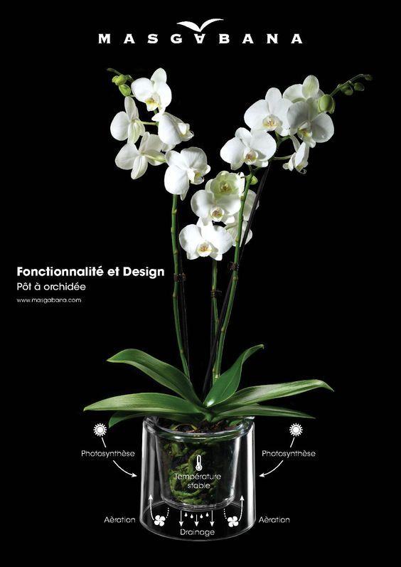 Maceta para orquidea plantas y jardiner a pinterest for Cuidados orquideas interior
