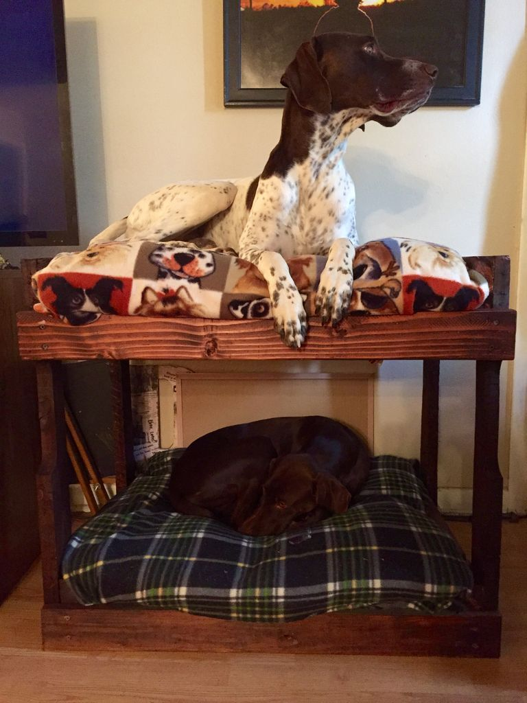 diy dog bunk beds diy dog projects dog bunk beds dogs. Black Bedroom Furniture Sets. Home Design Ideas