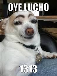 Lucho El Perro Buscar Con Google Funny Animals How To Draw Eyebrows Bones Funny