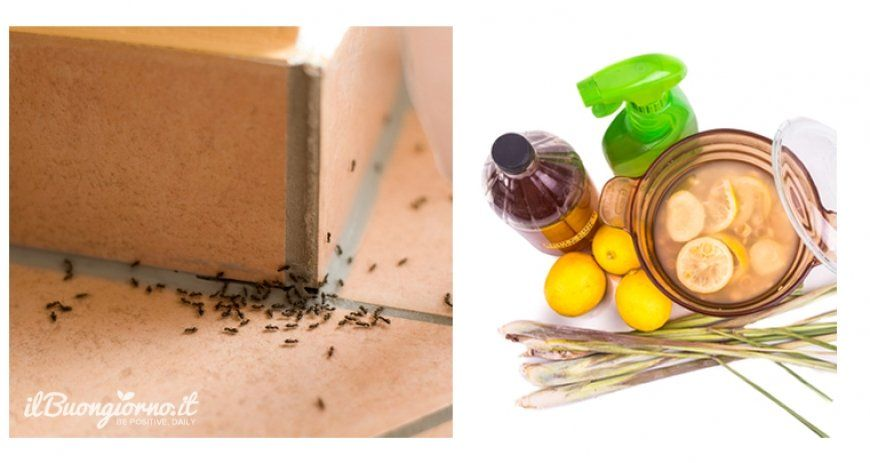 estate sinonimo di formiche quante volte avete visto questi piccoli animaletti scorrazzare sul piano