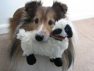 Pin By Kim Keith On Sheltie Love Sheep Dog Puppy Sheltie