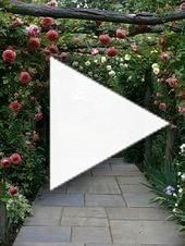 Climbing plants allow you to take your garden to new heights when plante  Gardening for Nerds Vines  Climbing plants allow you to take your garden to new heights when pl...