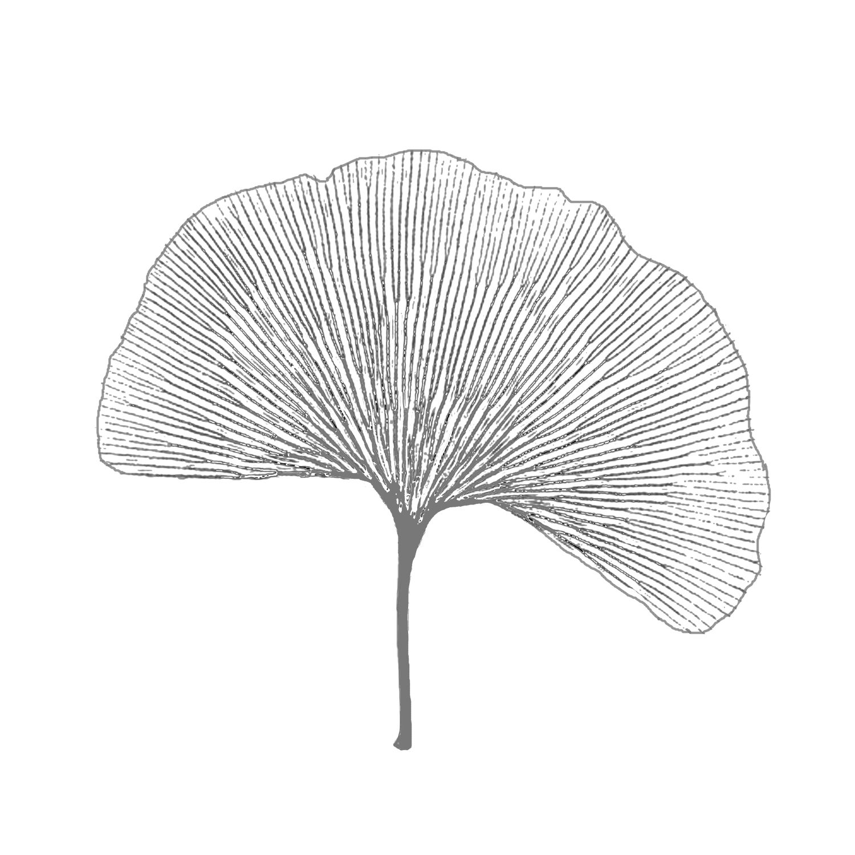 Skeleton Ginko Leaf