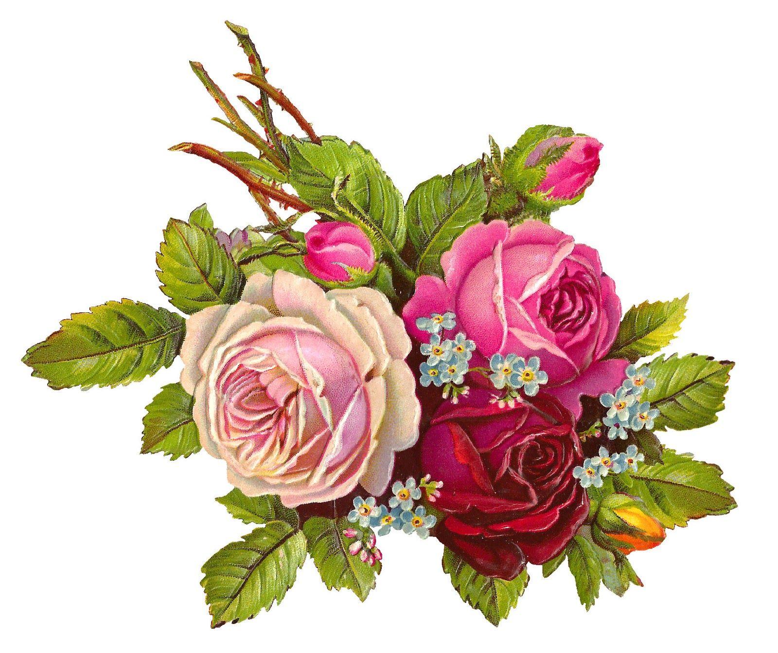 Digital Rose Download Digital Flowers Vintage Flowers Flower Printable