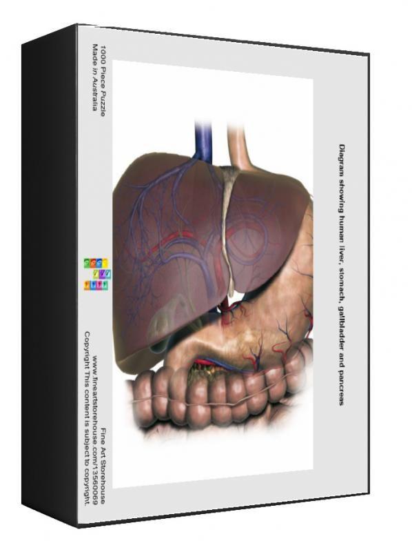 24+ 1000 Piece Puzzle. Diagram showing human liver, stomach,