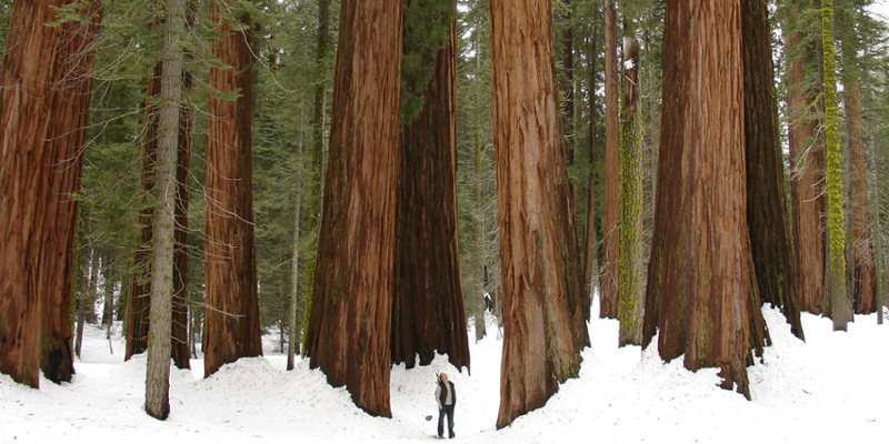 7 Road Trips to Take This Winter - The Bold Italic - San Francisco