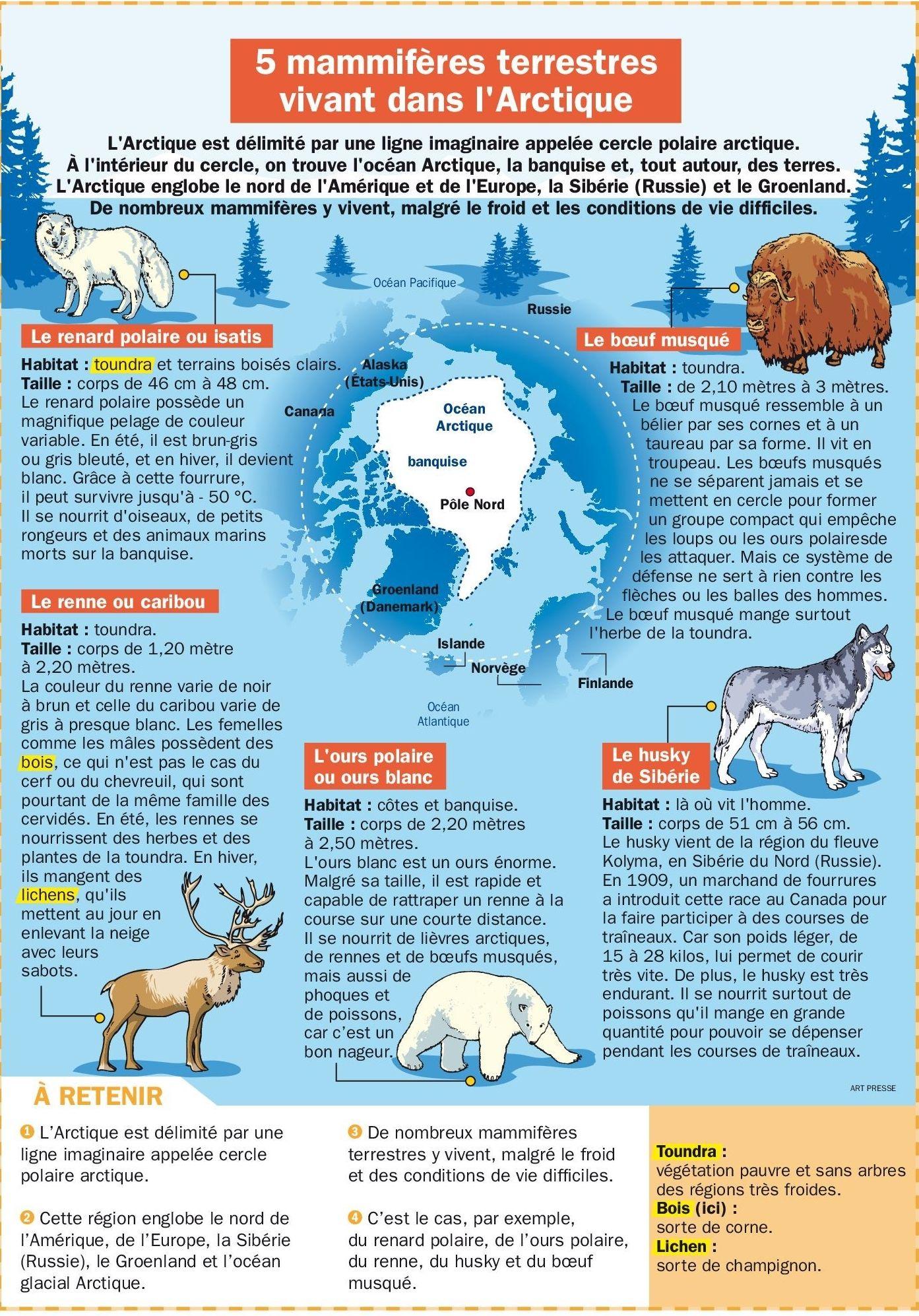 5 mammif res terrestres vivant dans l 39 arctique - Animaux pole nord ...