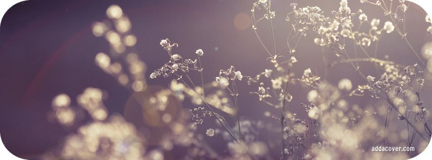 Flowers In The Sun Facebook Cover Background Hd Wallpaper Vintage Flowers Facebook Cover Photos Vintage